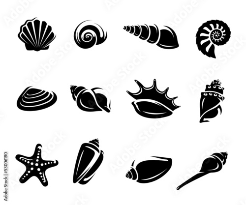 Fototapeta Seashells set. Vector
