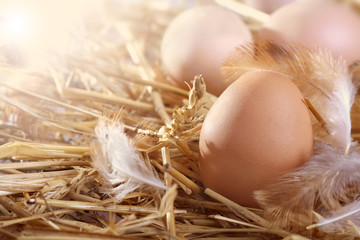 fresh eggs in a nest