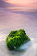 Roca con algas verdes en el mar
