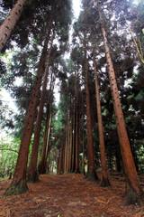 forest landscape in Zhangjiajie scenic area