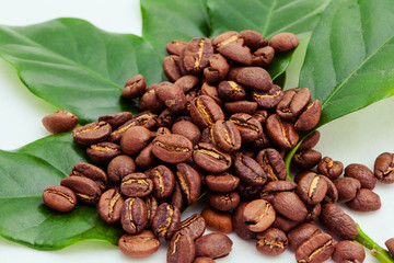 Coffee Beans and Coffee Plant