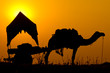 Silhouette camel at sunset in India .