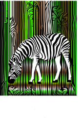 zebra in the forest