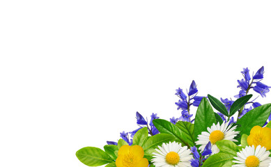 Daisies, blue and yellow wild flowers and green leaves