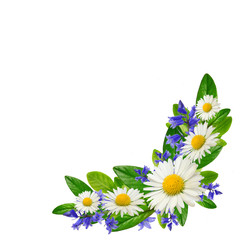 Bouquet  of daisies, blue flowers and leaves