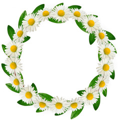 Circle frame of daisies and green leaves