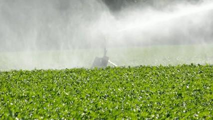 Bewässerung der Feldfrüchte, mit einem Sprenger