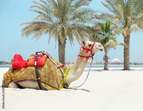 Fototapeten,kamel,abenteuer,niemand,karawane
