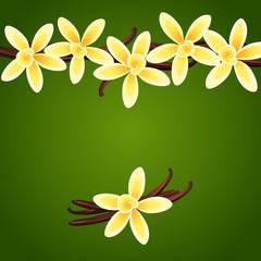Vanilla flowers. Vector floral background.