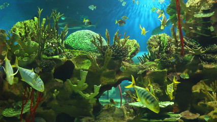 view in oceanarium