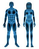 Male and female human body