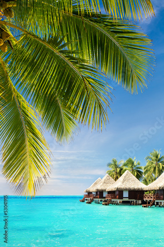 Coconut palm tree leaves over ocean with bungalows
