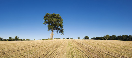 Lone tree in dry landscape.