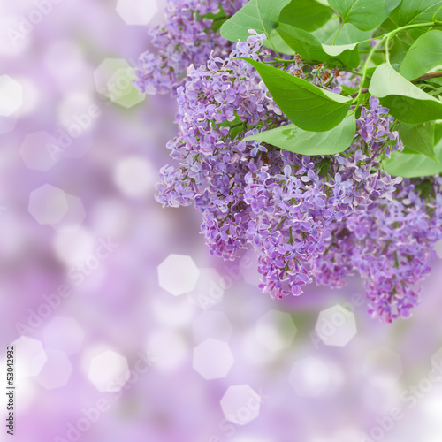 Foto op Plexiglas Lilac Lilac flowers tree