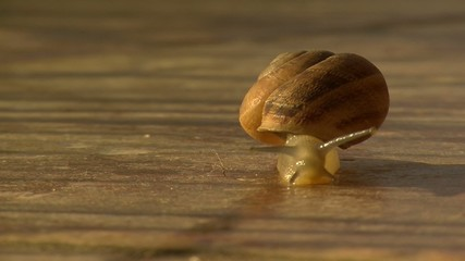 walking snail