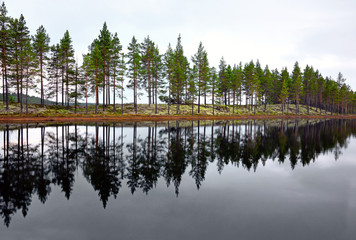 scandinavian lake with conifers