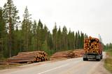 Timber - 53045315