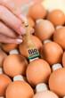 kontrollierte eier