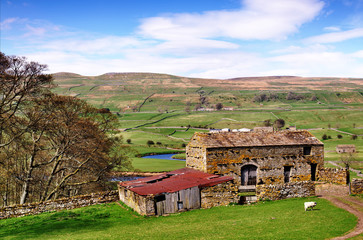 Barn and trees in the Yorkshire Dales