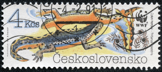 stamp printed in CZECHOSLOVAKIA shows a Triturus alpestris