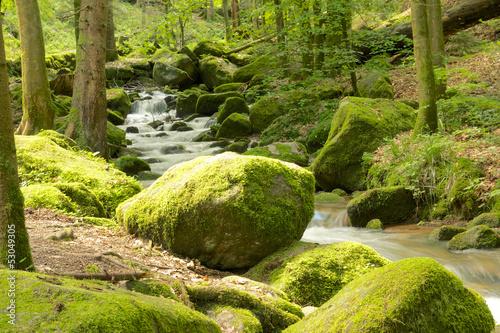 Fototapeten,black forest,bach,cascade,klar