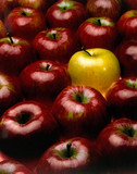 red apples with the exception of a yellow poster