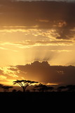 Fototapety African sunset with acacia
