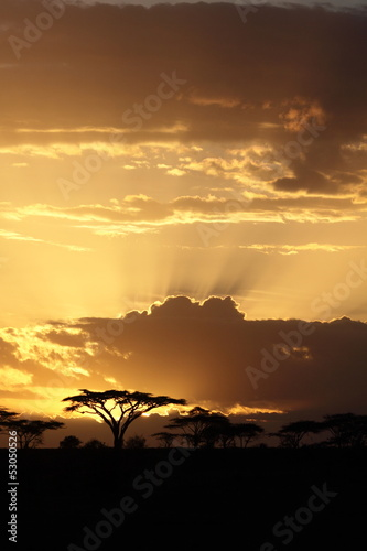 African sunset with acacia