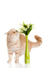 cat with flowers isolated on white backgroud