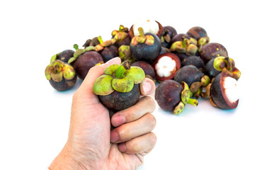 Mangosteen in hand isolated on whith background
