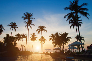 silhouettes of palm trees on sunset.
