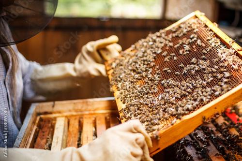 Foto op Plexiglas Bee Beekeeper