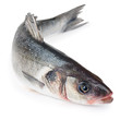 Seabass fish Isolated