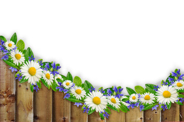 Wooden planks border with wild flowers