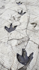 Dinosaur Footprints in Stone