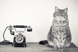 Vintage telephone and cat sitting on table sepia photo