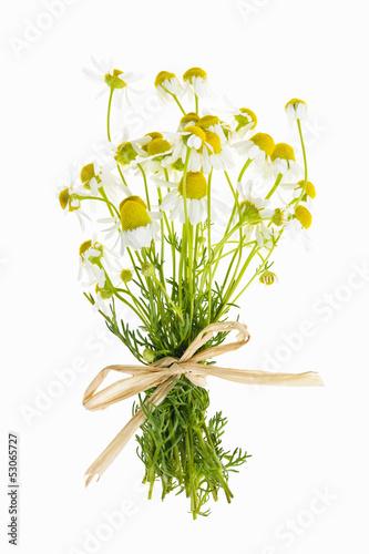 Staande foto Lelietje van dalen Chamomile flowers on white