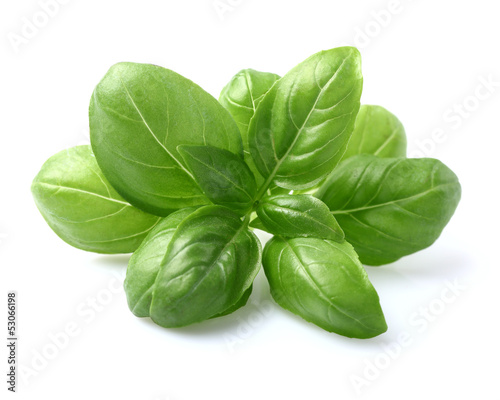 Basil leaves in closeup - 53066198