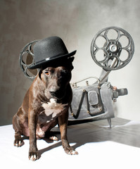 Dog and cinema