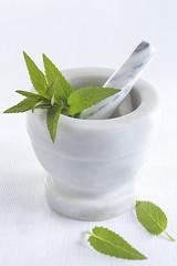 Phytothérapie - Menthe Bergamote ou Citronnée