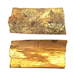 Close-up of isolated broken stub log bark with wooden texture is