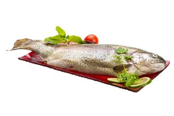 Fresh raw rainbow trout