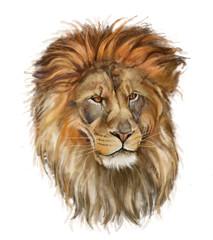lew na białym tle
