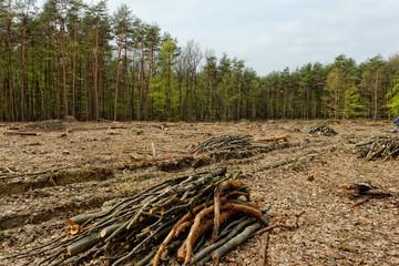 Deforestation and logging