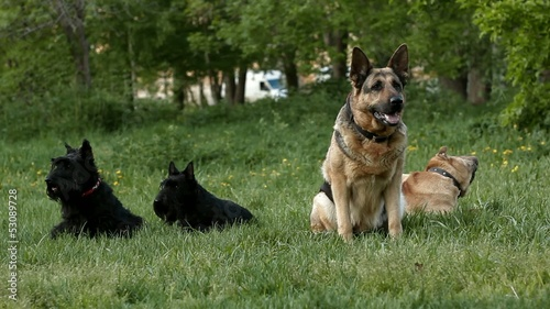 group of dogs in the park