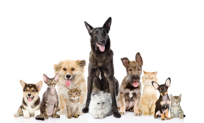 Group of cats and dogs in front. looking at camera. isolated