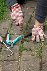 Gärtner jätet auf Pflasterweg Unkraut