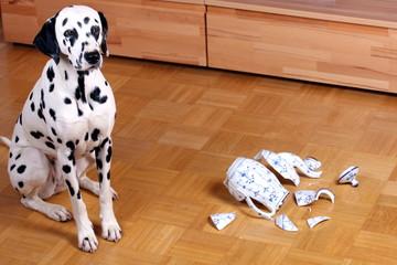 Hund mit kaputter Kanne schaut schuldbewußt