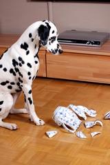 Hund sitzt vor zerstörter Kanne schuldbewußt