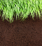 Green grass and soil pattern background.